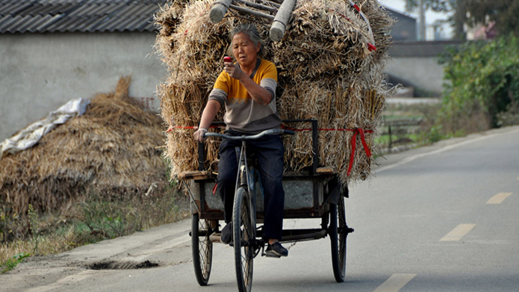 woman pedalling a cargo tricycle filled with hay, while holding a cellphone